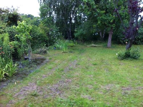 Boggy Garden