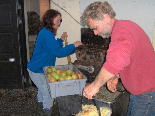 Pulping apples
