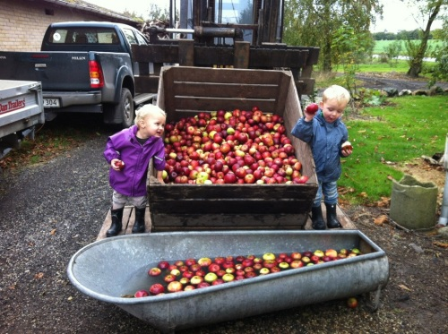 washing apples