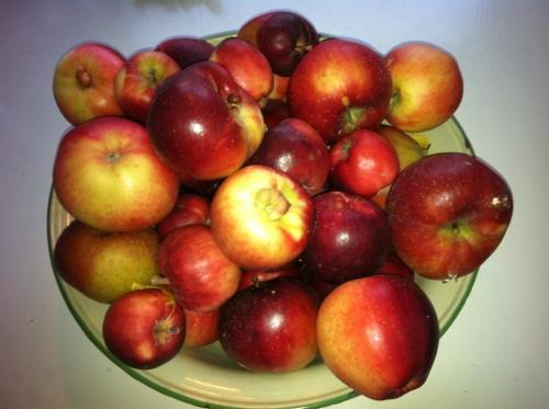 Lobo apples