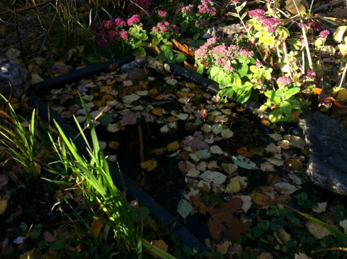 The Puddles in Autumn