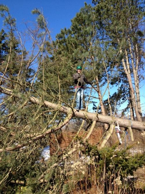 Flâneur Friend in a tree