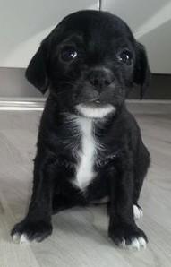 Flâneur Puppy?