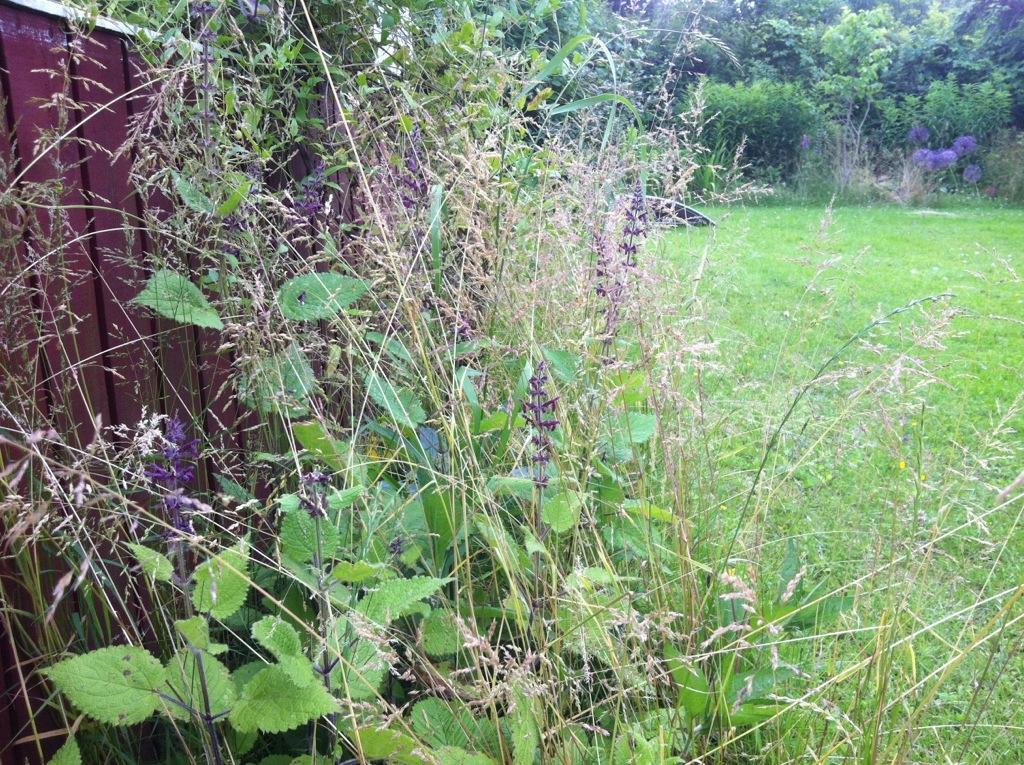 War On Slugs Fl Neur Gardening